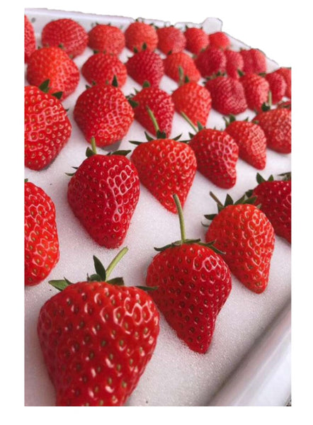 Buy Fresh Red Strawberries Online for Delivery - Evergreen Seafood Singapore