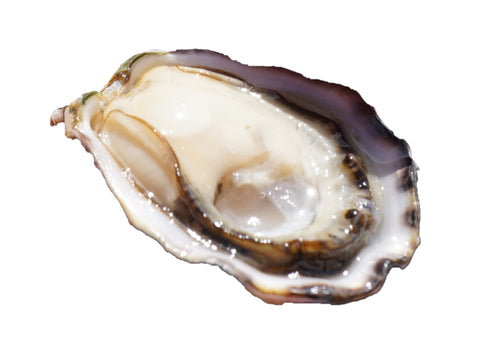 Live Canada Pacific Oysters - Evergreen Seafood