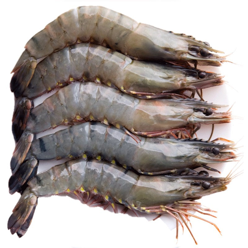 Buy Live Tiger Prawns Online for Delivery - Evergreen Seafood Singapore