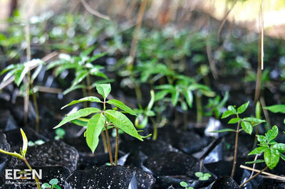 funding reforestation