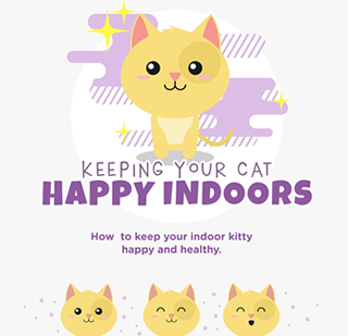 Keeping Your Cat Happy Indoors