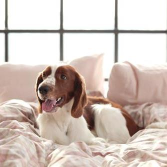 What is the most resilient bedding for dogs and cats that sleep in your bed?