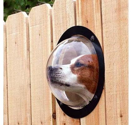 Wooden fence with perspex dome to allow a dog to look into next doors garden