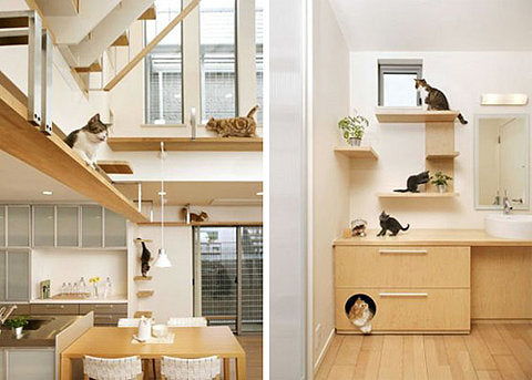 White and natural wood kitchen space with climbing shelves all around the room and ledges for cats to walk on