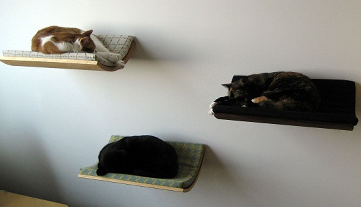 Three shelves on the wall with cats sleeping on each