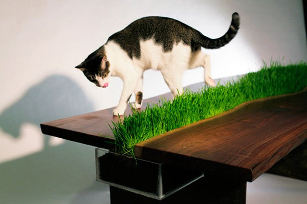 Wooden table with strip of real grass down the middle of the table, and cat on the top
