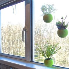 Tennis balls used as small planters in a window
