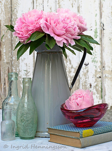 Grey metal water jug used as a vase for full pink flowers