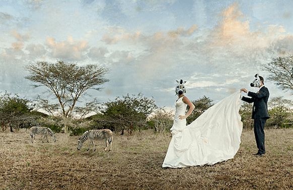 Bride And Groom With Zebra Masks In Africa Next To Real Zebras