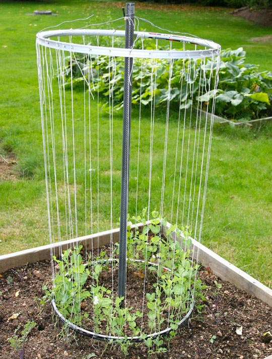 Two bicycle rims used to create support for growing plants