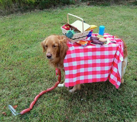 A dog acting like a picnic table, with red and white checked table cloth and picnic basket and plates on his back