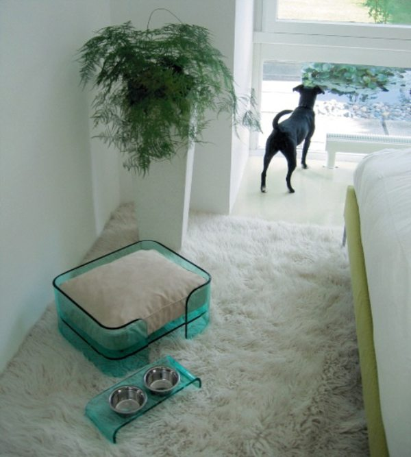 Transparent blue plastic dog bed on a cream rug, with dog in the background looking out of the window