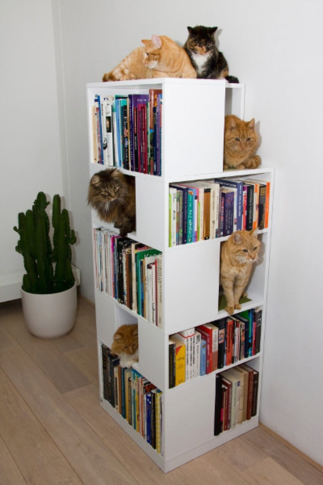 Free standing bookshelf columns with some shelves for books and others for cats