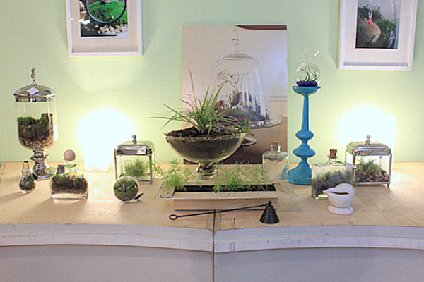 Pale green wall with desk space containing terrariums