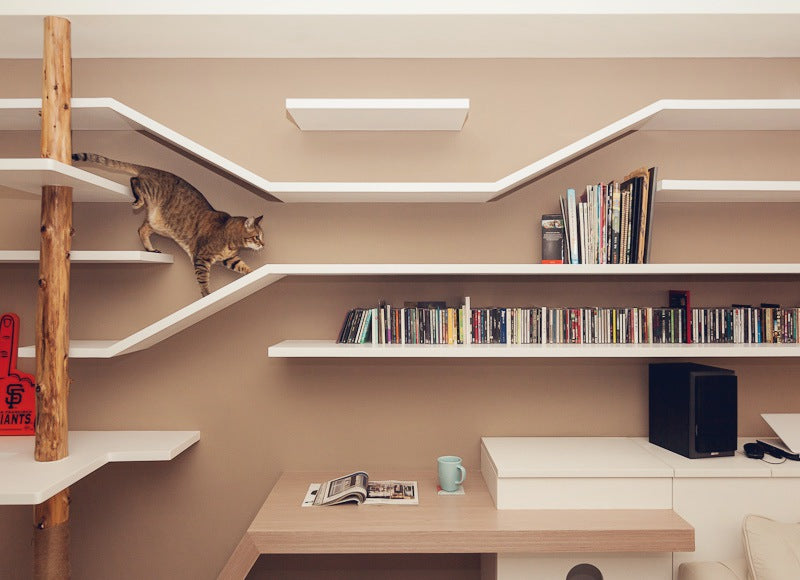 Wall mounted white shelves, with cds and books on some shelves and cat walking on another shelf