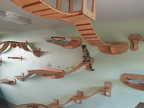 Wooden bridges in a living space for a cat to walk and climb on