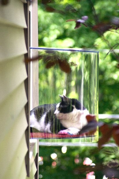 Glass cat box that sticks out of side of the house, with shelf for cat to see the garden