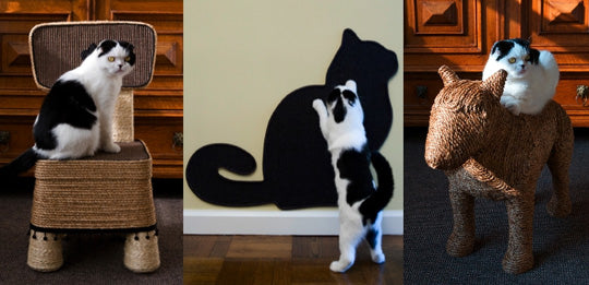 A black and white cat in three different images, sitting on a chair, scratching the wall and sitting on a wicker dog