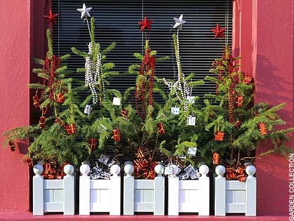 White wooden planters containing mini Christmas trees, sat in a window frame