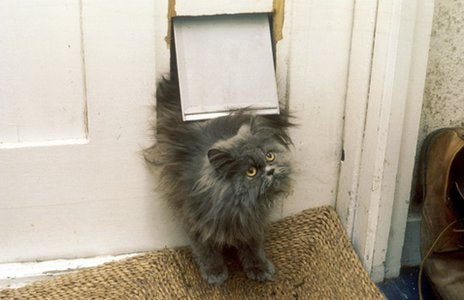 A fluffy grey cat coming through a cat flap