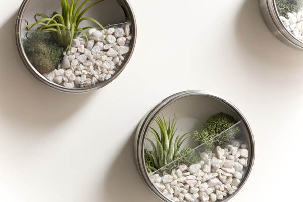 Metal Biscuit Tins With Clear Lids Hanging On A Wall And Being Used As Terrarium