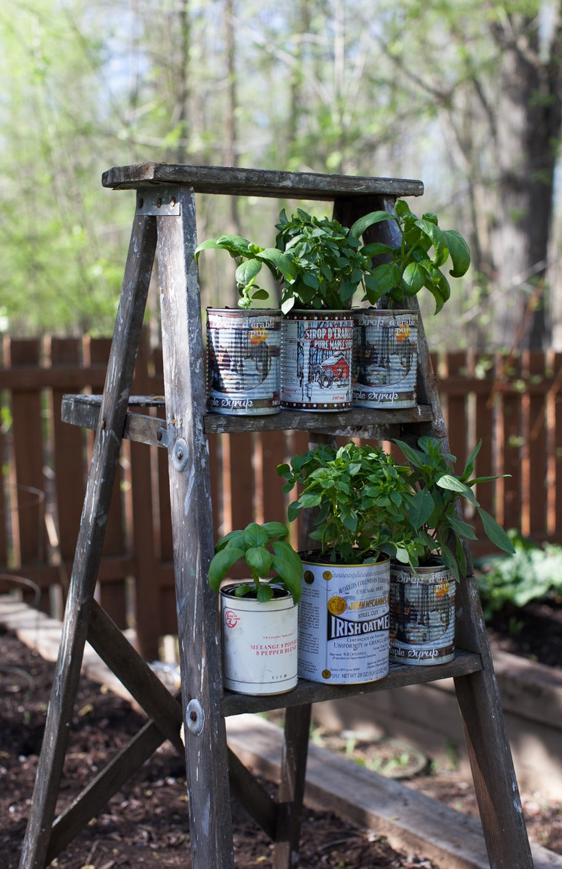 Old Ladder In The Garden Holding Six Plant Pots
