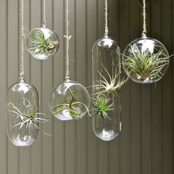 Terrarium of plants hanging from the ceiling