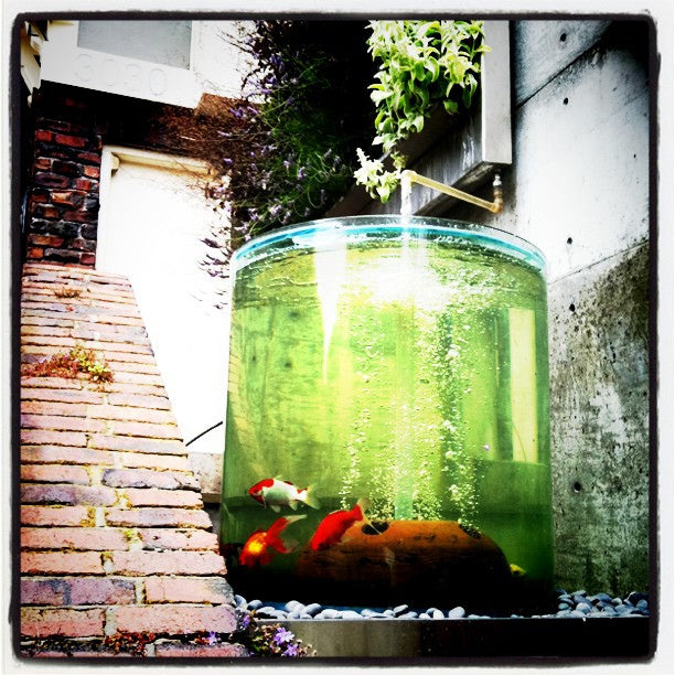 Cylindrical glass fish bowl with gold fish inside