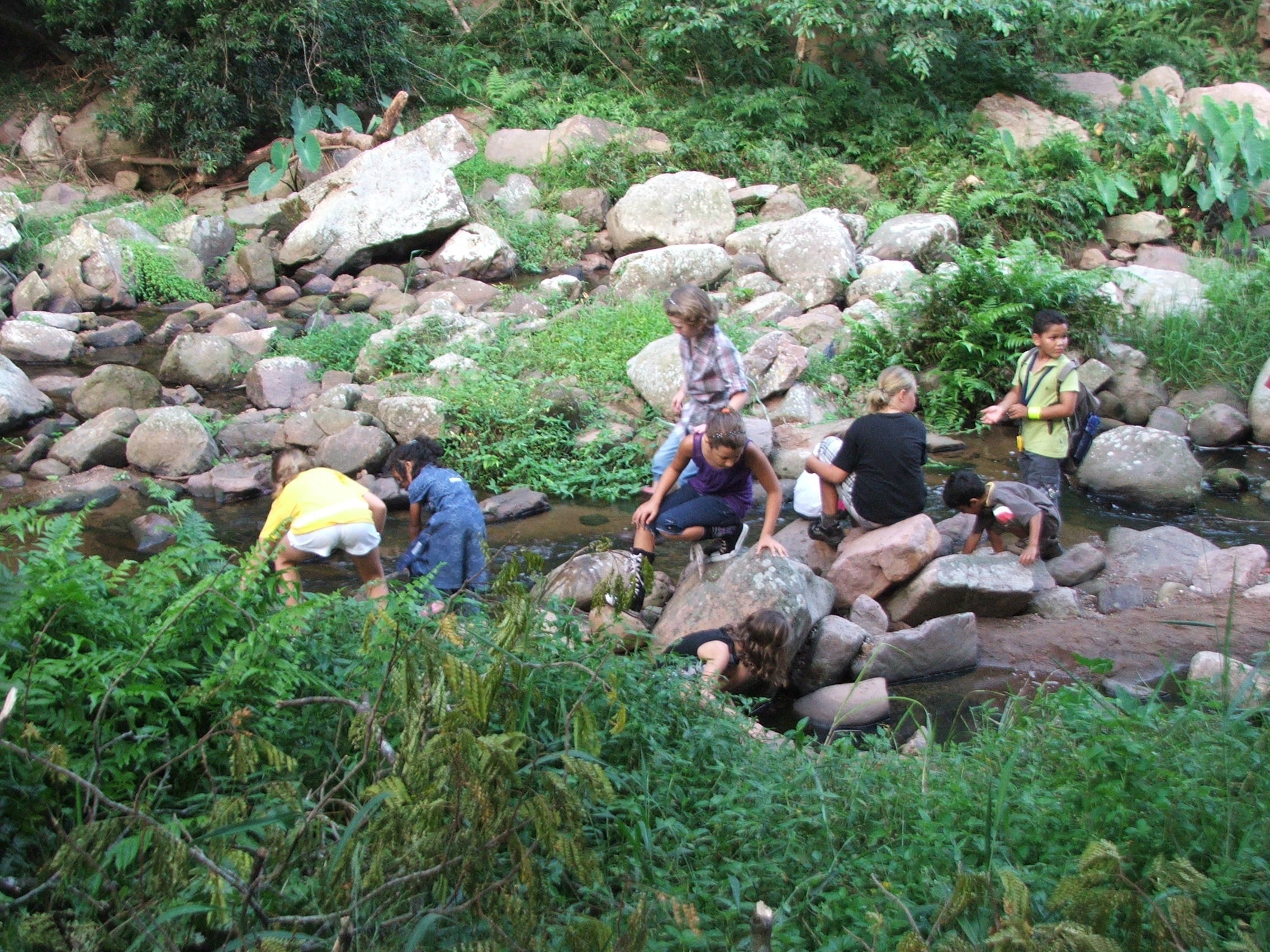 Lots of rocks and stones by a stream with a group of children looking for fish, tadpoles and frogs