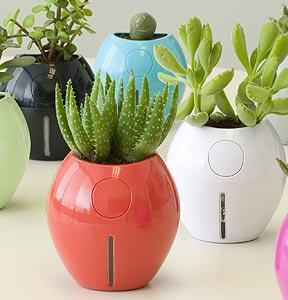Smooth round plant pots in different colours