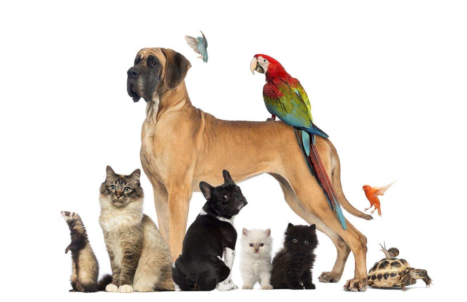 Dogs, cats, birds, ferret, tortoise and snail