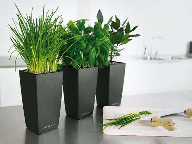 House plants in square black planters