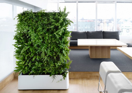 Green plants and leaves in a larger planter in a living room