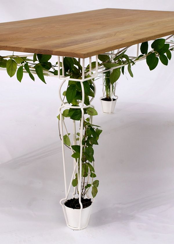Wooden table with metal legs, with plant vines going through the legs