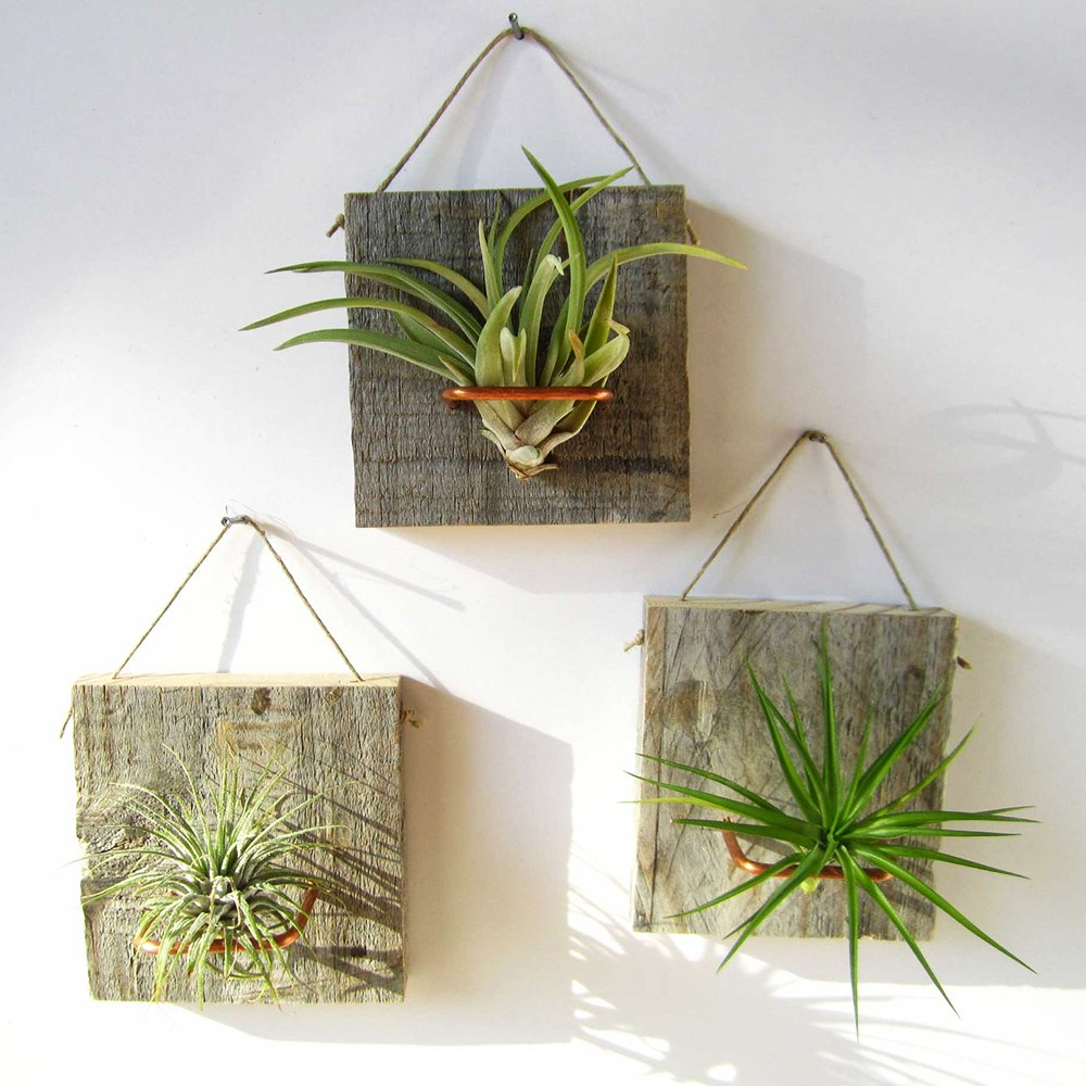 Wooden panels hung on a wall like pictures, with plants hanging on them