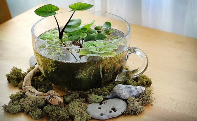 Clear glass teacup containing water and plant life