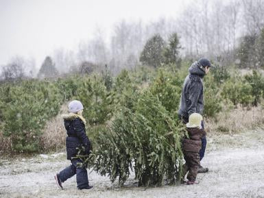 Father and two children carrying a Christmas tree in the snow