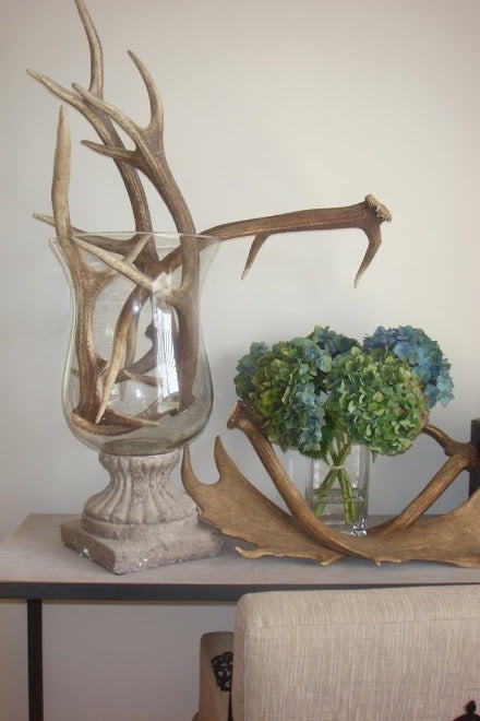 Antlers in a glass vase and on a counter top