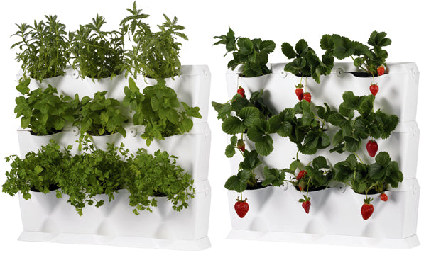 Herbs and strawberries in a white mini garden unit