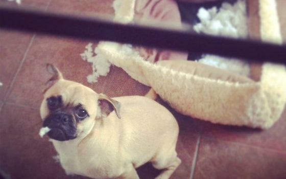 12 – Ronnie ripped two beds to shreds within an hour. A new record! Owner: Kibby1
