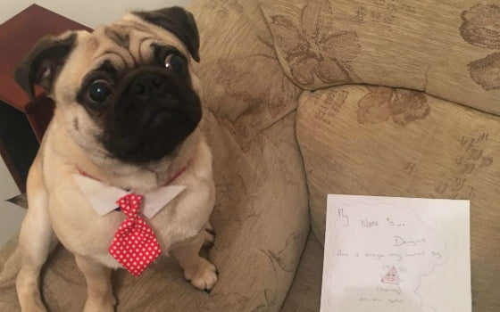 13 – Dougie left a smelly mess on the sofa, but at least he left a note saying sorry. Owner: Sammydodds