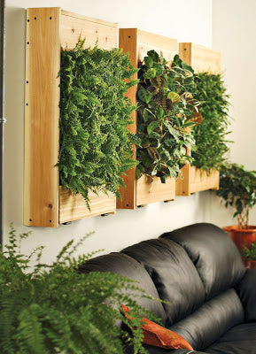Natural wooden cube boxes mounted to the wall, with greenery growing out of their sides