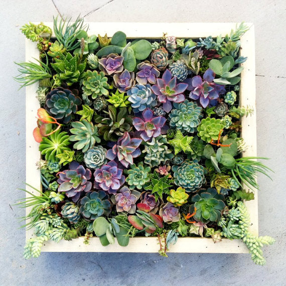 A birds eye view of a white square planter, containing green and purple flowers and plants