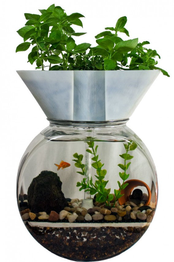 A herb planter on top of a goldfish bowl, with swimming fish inside