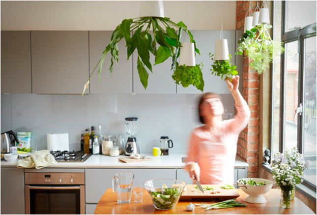 A number of herb planters hanging from the ceiling in a kitchen