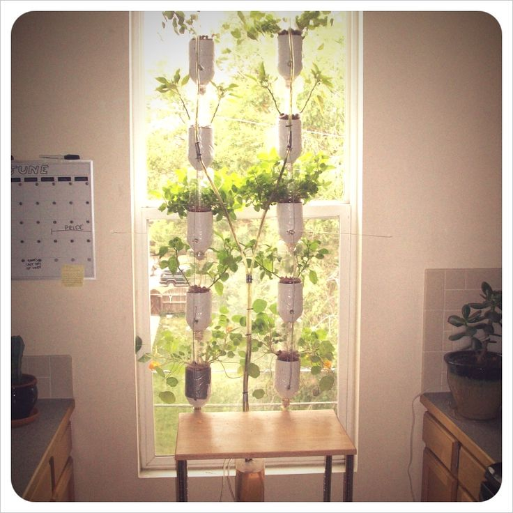 Bottles hung by sting at a window containing soil and plants