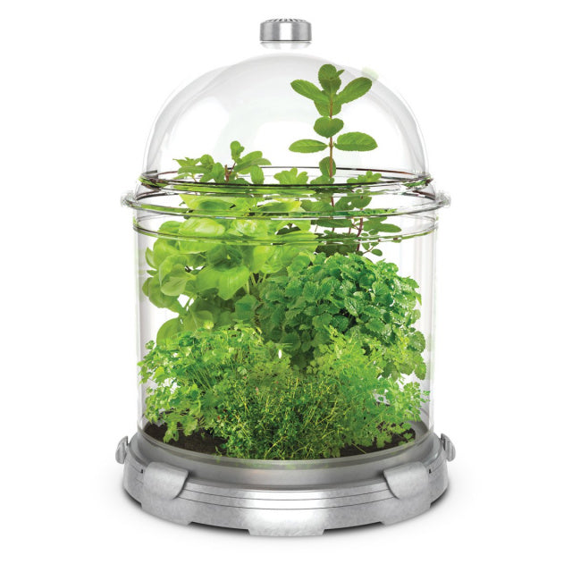 Glass bell jar style plant container with leaves and herbs growing inside