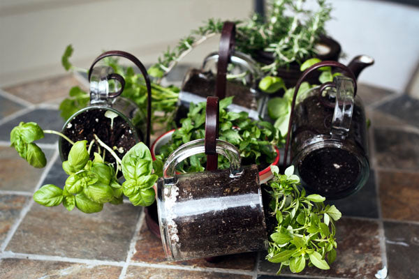 Glass cups used as planters for herbs