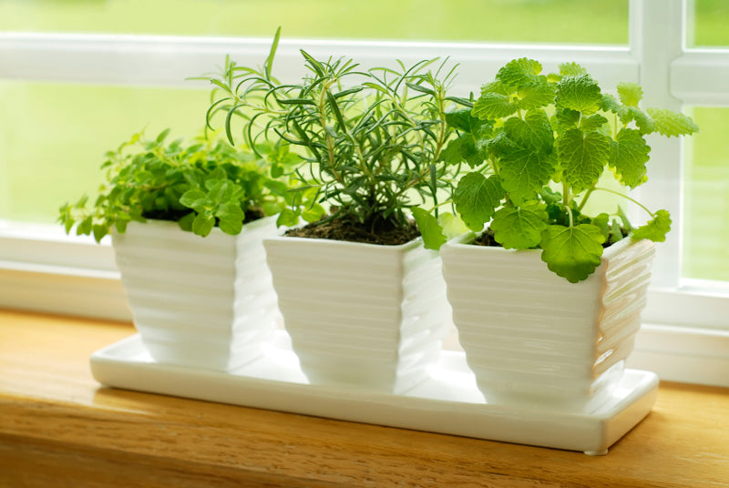 Different herbs in three white planters on a window sill