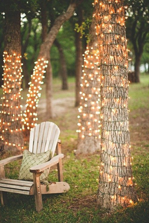 Lit Fair Lights Wrapped Around Tree Trunks